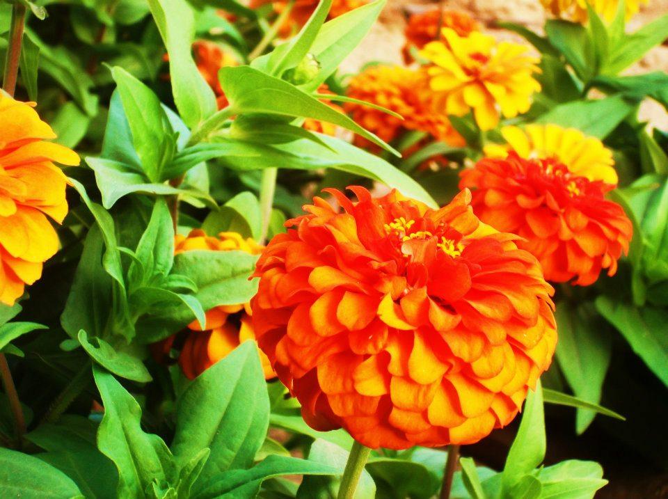 Cee's Fun Foto Challenge :Orange