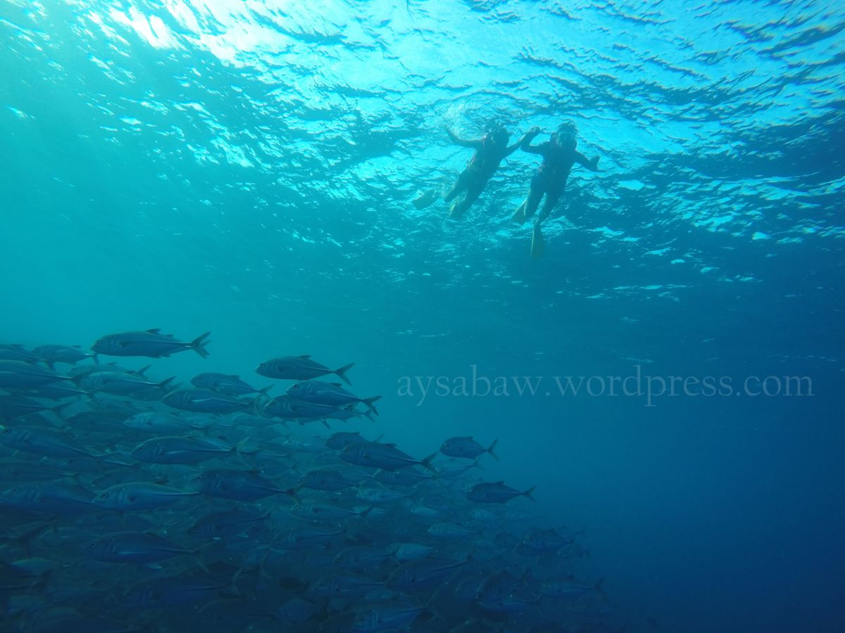 Maldives Ulit.