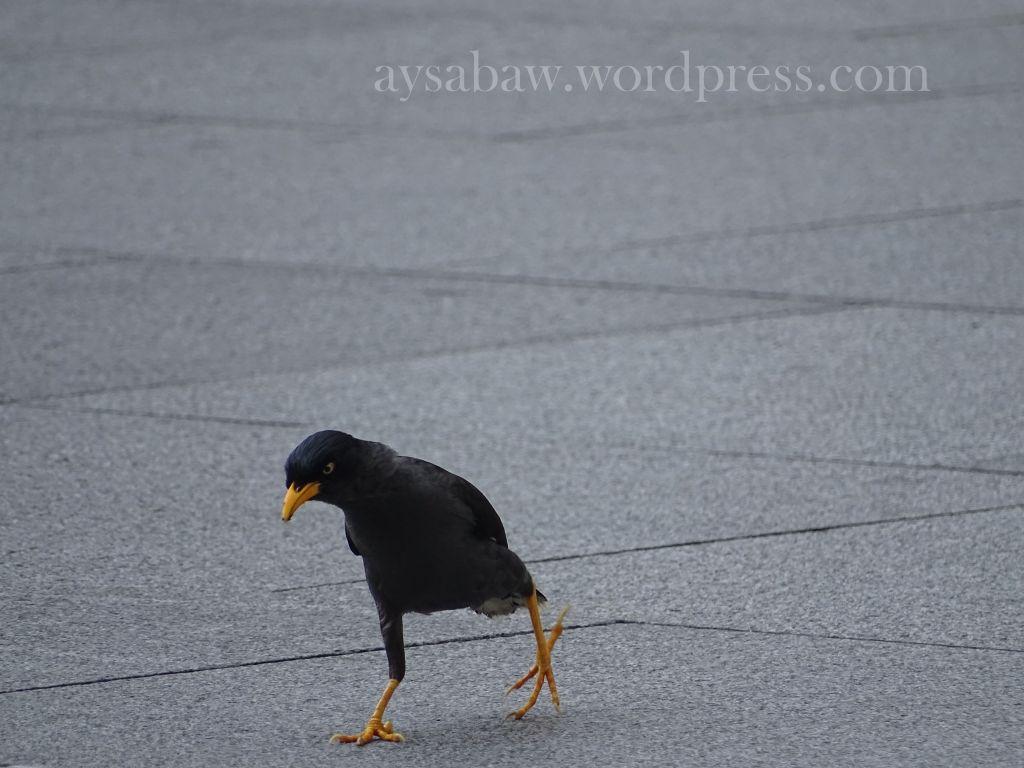 Bird Singapore