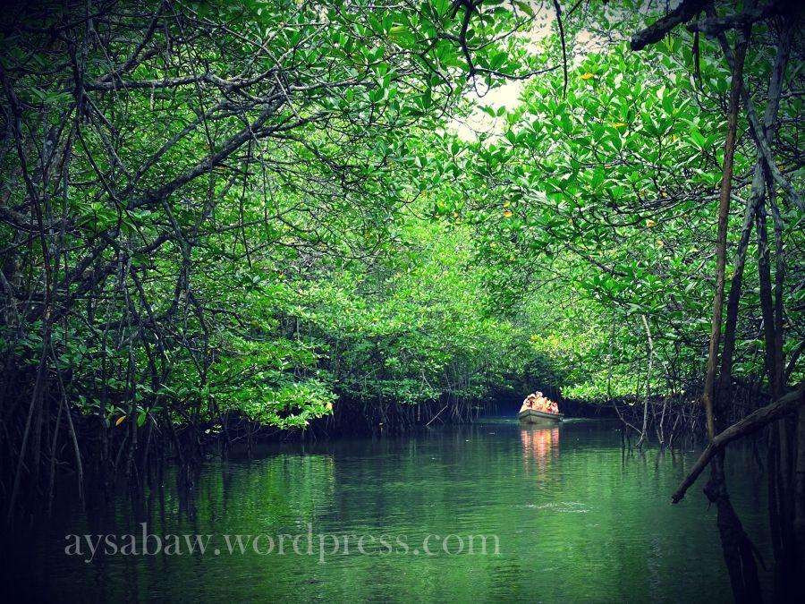 Inside the Mangroves 2