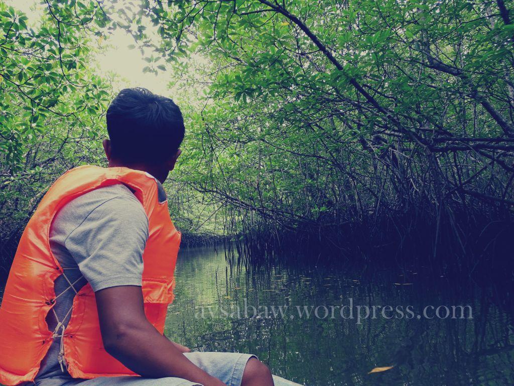 Inside the Mangroves
