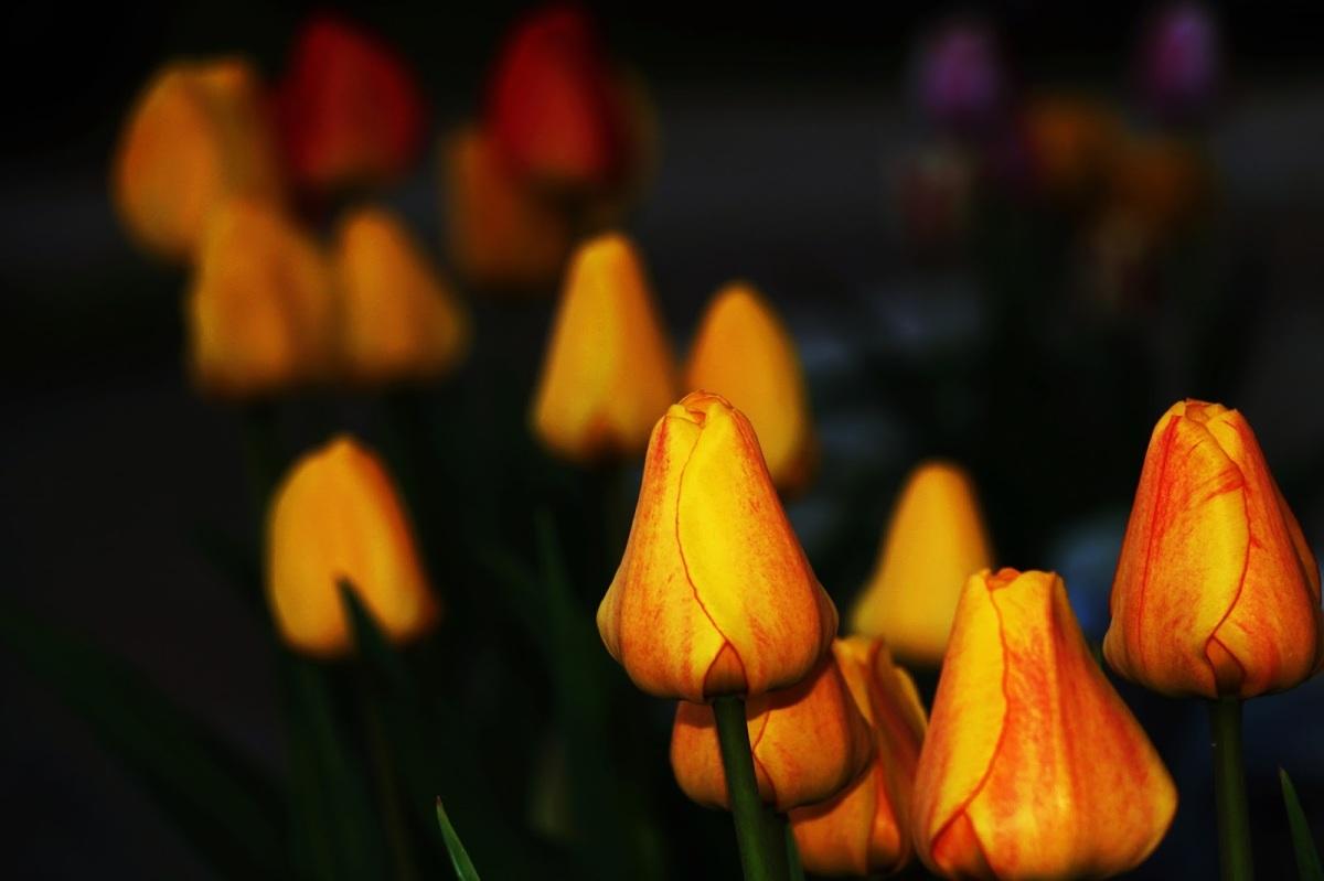 Flower in theNight