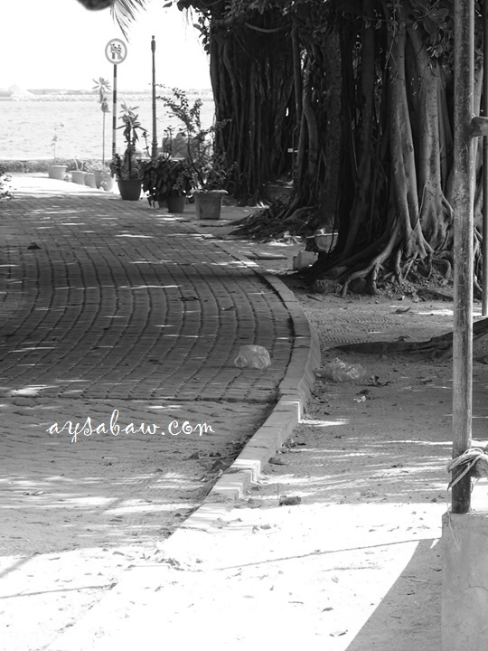 balete-trees