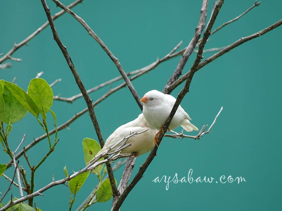 The Parakeet Invasion