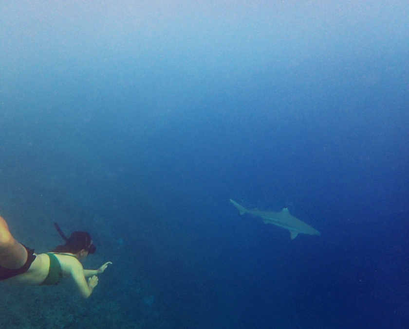 Freedive with Sharks
